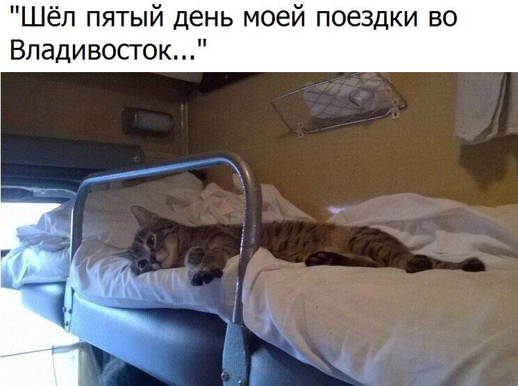 кот.jpg