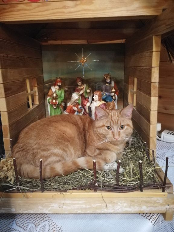Кот послушник Гарфилд-2.jpg