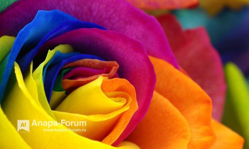 22370459_rose-flower-colorful-petals(1).jpg.5e8fdc42e100d75218f914bebea75a37.jpg