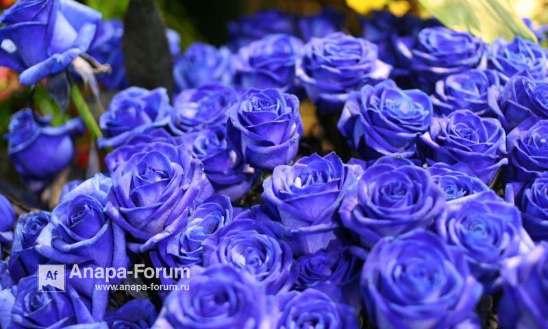 22594432_cvety-cvetok-rozy-sinie-rozy(1).jpg.b6da578ce7e285a6fa94726d7951ea55.jpg